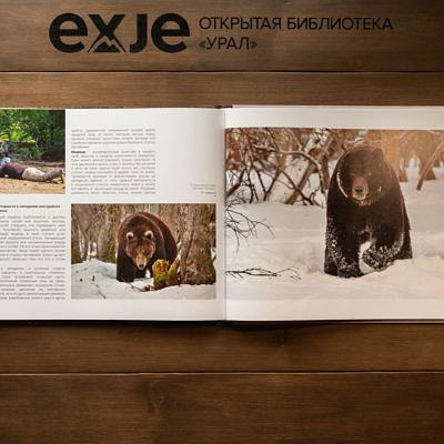 Медведи Камчатки:  основы безопасного общения