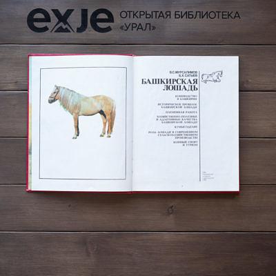 Башкирская Лошадь В.С. Мурсалимов